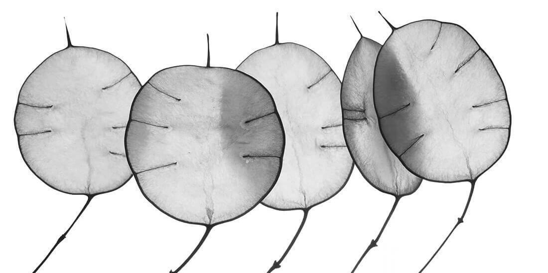 Gefaesschirurgie-Muenchen-Sued-Jobs